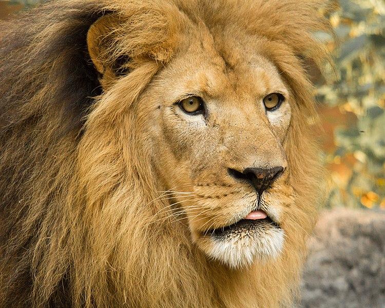 God Wants Lions